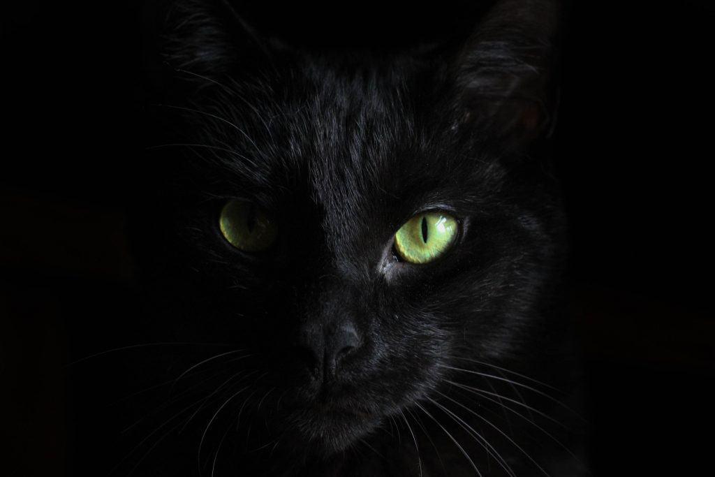 Large image of halloween black cat